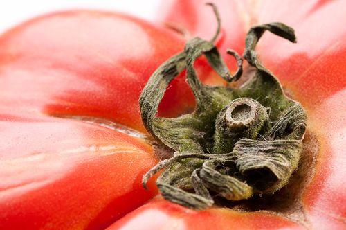 Vintage Wine Heirloom Tomato Extreme Closeup